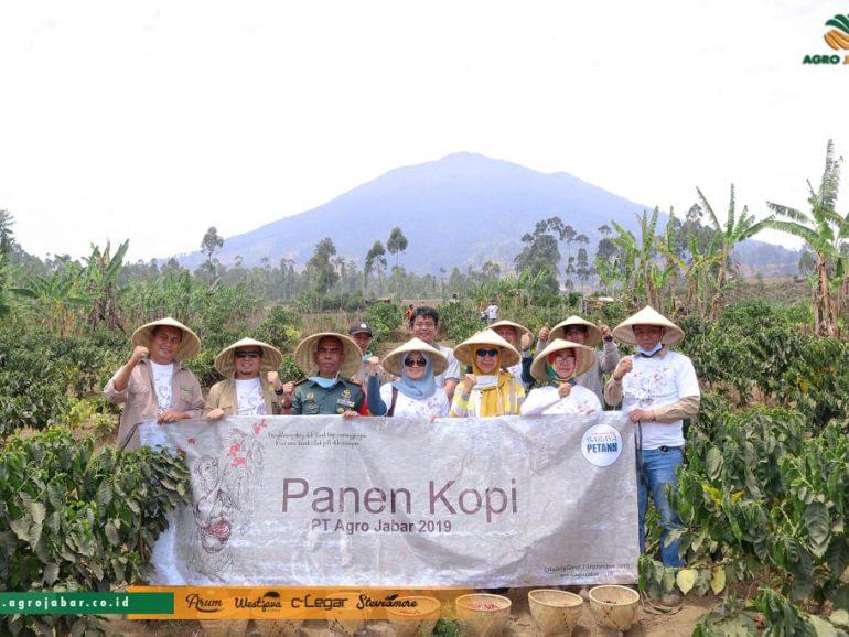 Kembangkan Program Kemitraan, PT Agro Jabar Panen Perdana Kopi