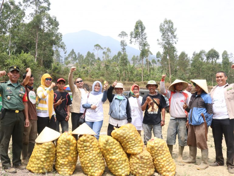 Usaha Berkebun Jeruk Lemon Sukses di Perkebunan Pamegatan