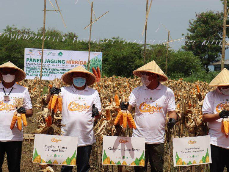 Lahan Marginal Kini Dapat Menjadi Produktif untuk Usaha Pertanian