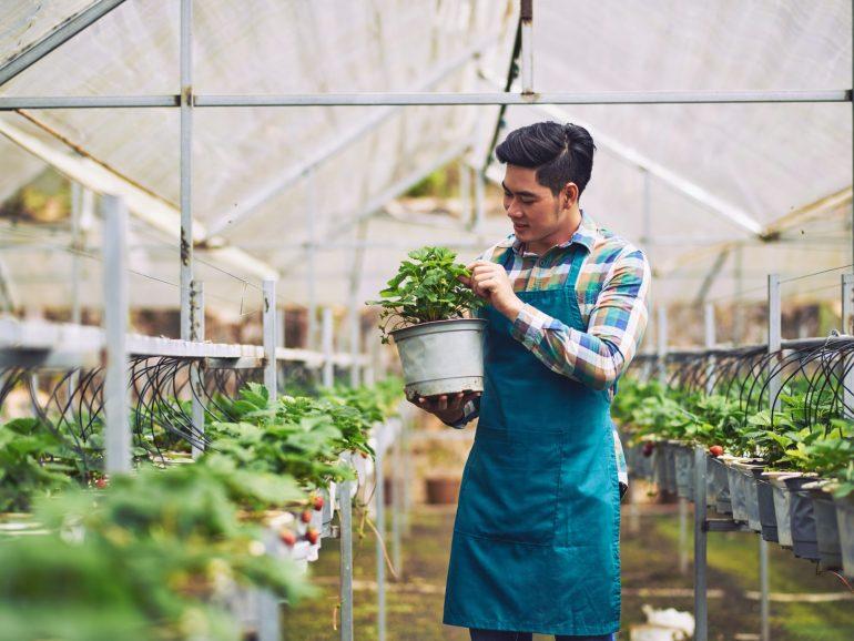 6.000 Milenial Sudah Daftar Program 5.000 Petani Milenial Jawa Barat, Syarat Lolos Harus Seperti Ini