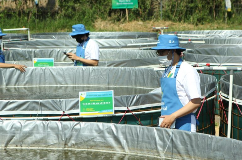 Agro Jabar Siap Menyerap Hasil 55 Petani Milenial Pembudidaya Ikan